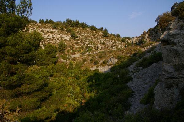 La végétation dans le lit du ruisseau de la Combe de Lavit se densifie
