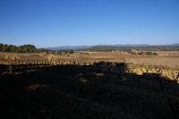 Paysage de vignes vers Les 3 eaux