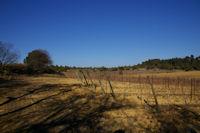 Paysage de vignes vers Gibalaux