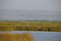 Canards et herons sur l'etang de Campignol