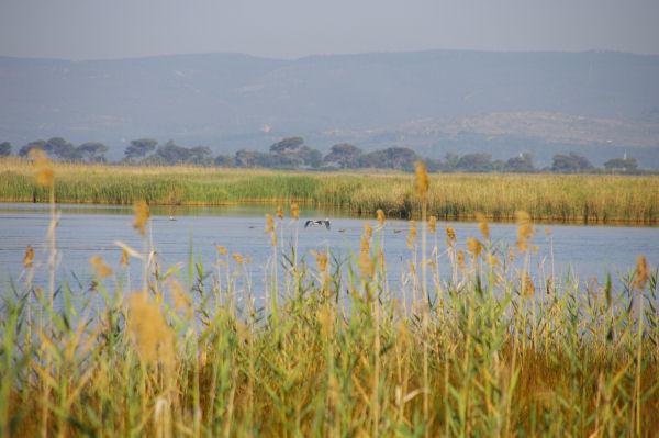 Canards et hérons sur l'étang de Campignol