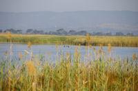 Canards et herons sur l&#39etang de Campignol