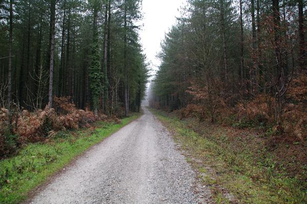 Le chemin aux Bruyères des Augers