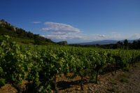 Le vignoble du Domaine des Figuieres
