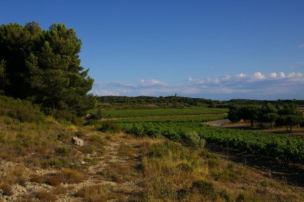 Les vignes des Mongettes