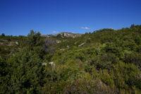 La vegetation basse mais drue vers la Bergerie des Figuieres