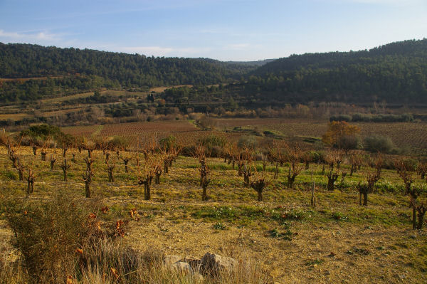 Les vignes de La Peyrouse dans la vallée de l'Orbieu