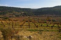 Les vignes de La Peyrouse dans la vallee de l&#39Orbieu