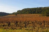 Les vignes vers la Métairie Miraillès