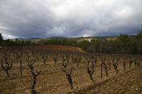 Les vignes vers Les Maillols