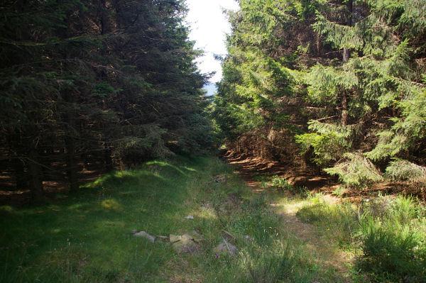 Le chemin au bois du Nouret