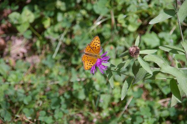 Un joli papillon au Bois du Nouret