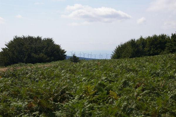 Des champs de fougères. taillis et éoliennes… vers Les Combes