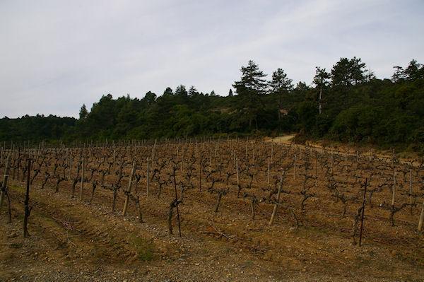 Les vignes du Château St Auriol