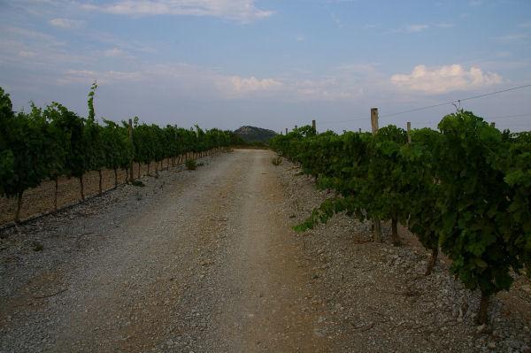 Le Pech Redon au bout de la vigne