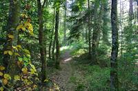 Dans la forêt près de Sarrat du Milieu
