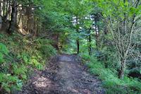 Le chemin dans le Bois de Cuzac