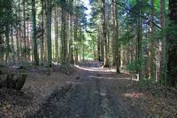 Le Bois de Cuzel près du PC du Maquis de Picaussel