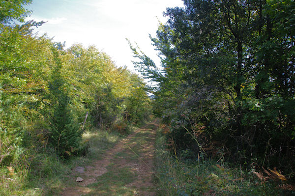Le chemin au dessus du Baccatel
