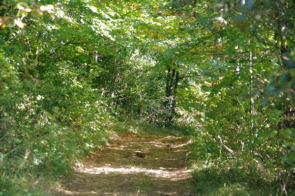 Le chemin peu avant le Pas de la Bessègne