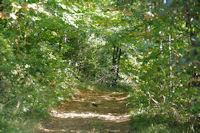 Le chemin peu avant le Pas de la Bessegne