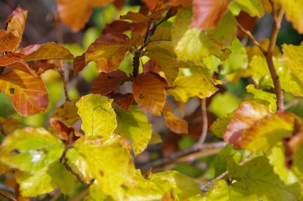 Couleurs d_automne