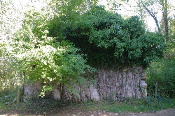 Les ruines d_en Dominique