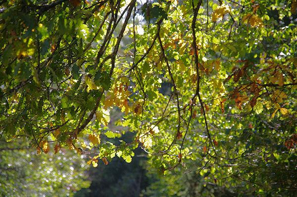 L_automne arrive
