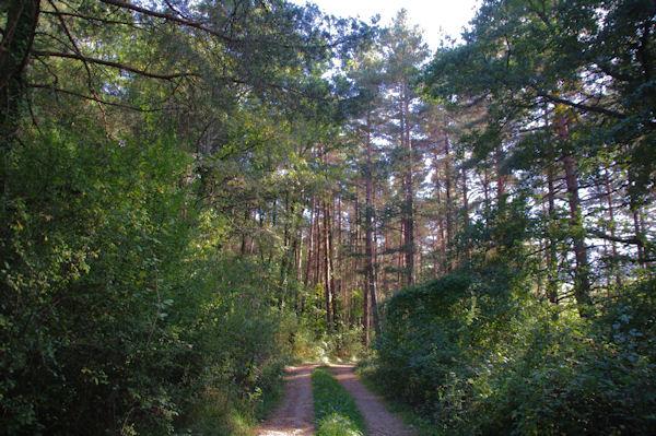 La forêt vers San Rouma