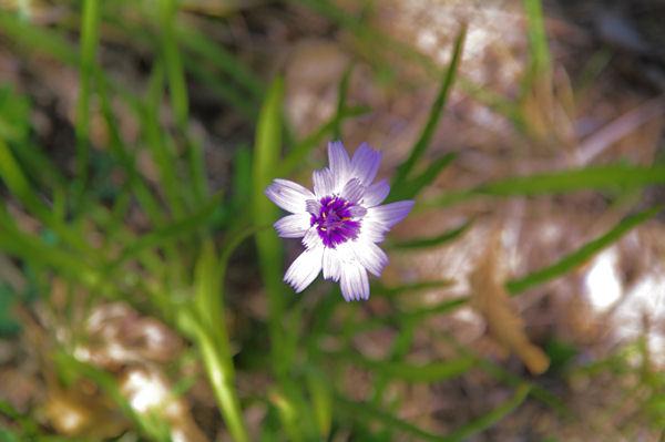 Fleur d_automne