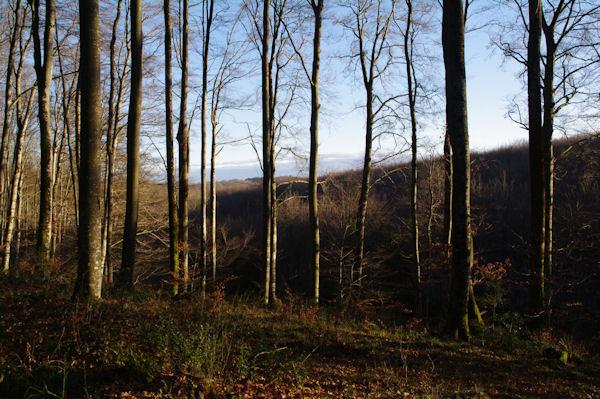 La forêt sous les Cabanelles