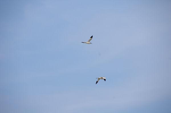 Un vol d&#39Avocelles