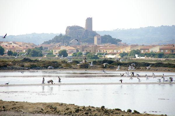 Un vol de Goélans, au fond, Gruissan et la tour Barberousse