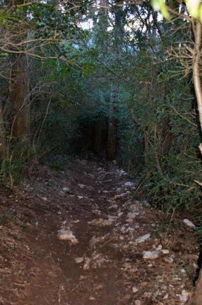 Un tunel de végétation