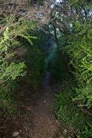 Le chemin dans les buis