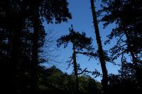 Le chemin au milieu des pins