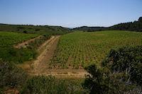 Les vignes de La Combe
