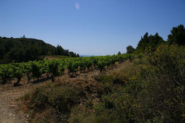 Les vignes à La Pierre