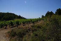 Les vignes a La Pierre