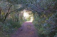 Le chemin arbore vers La Jasse