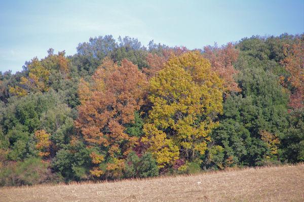 Couleurs d_automne près de Villelongue