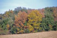 Couleurs d'automne pres de Villelongue
