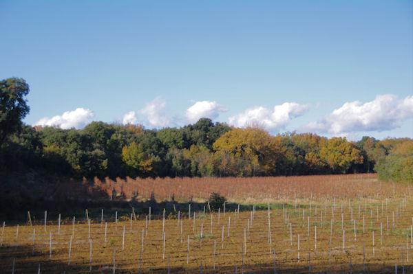 Des vignes aux Sesquières