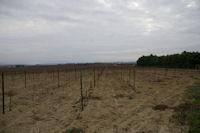 Les vignes vers Bouge Cabasse