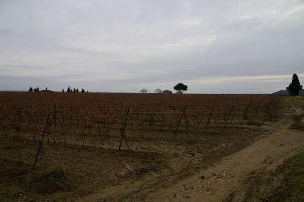 Les vignes vers La Canague