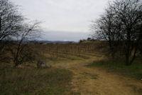 Les vignes vers Soustres, au fond, Montady