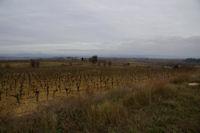 Les vignes vers Soustres