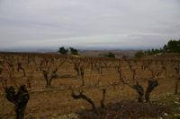 Les vignes au dessus de Soustre