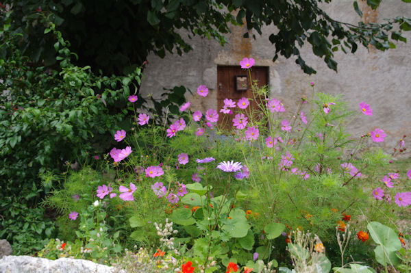 Parterre fleuri à Cas