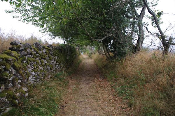 Le chemin remontant vers Le Gabutal